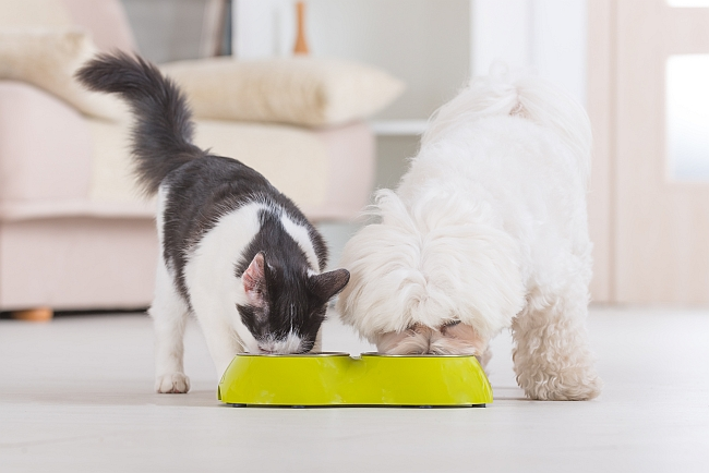 dog and cat eating from same pet food bowl