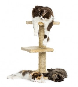 Cats lying on a cat tree