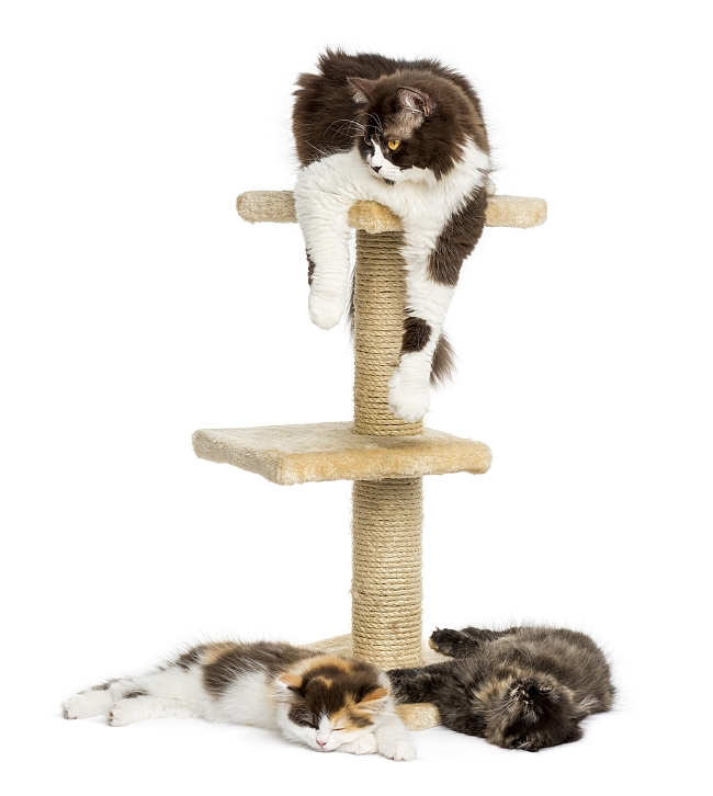 Cat Furniture and Trees