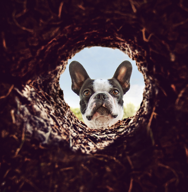 Down About the Digging – How to Stop Dogs & Cats from Digging!