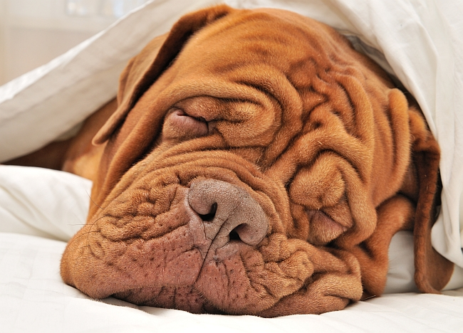 Snore No More: How to Stop Your Dog from Sawing Logs