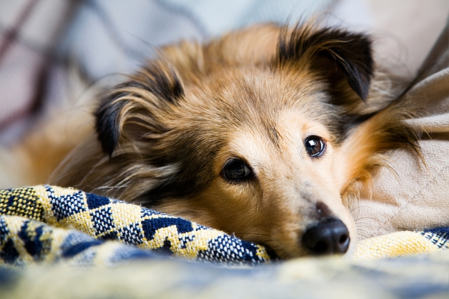 Dog Facts: Interesting & Fun Facts About Dogs