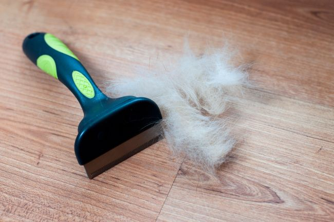 After a good brushing, put your pet hair pile to good use.
