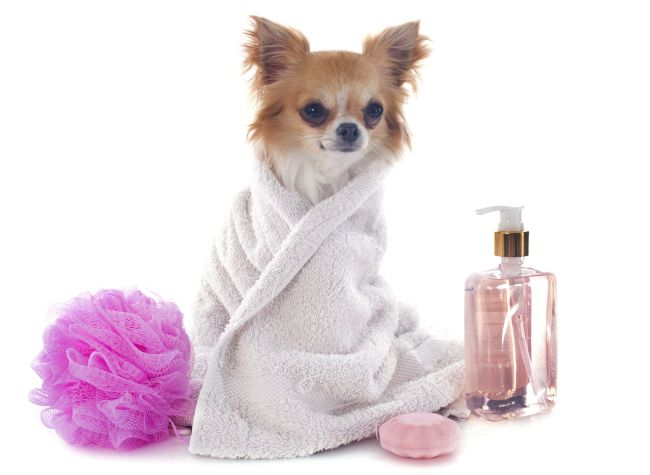 Pet Spa, Grooming, & Treatments