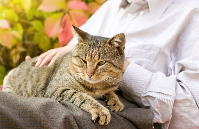 Best Cat Breeds for Pet Therapy