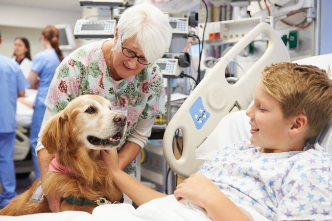 Best Dog Breeds for Pet Therapy