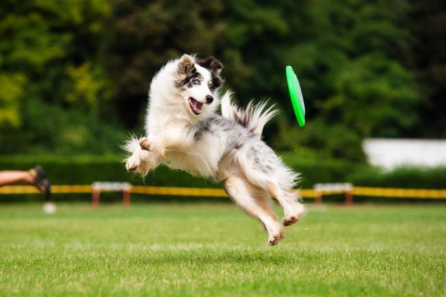 Best Dog Shows and Competitions