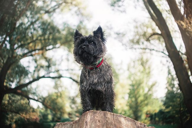 The Best Rodent-Hunting Dog Breeds