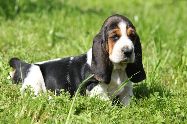 The Cheapest Dog Breeds