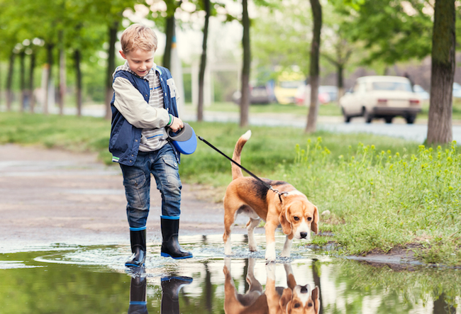 boy walking beagle dog in the rain