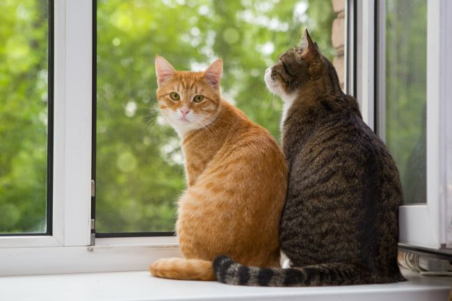 Feline Body Language: Cat Tail Posture Meaning