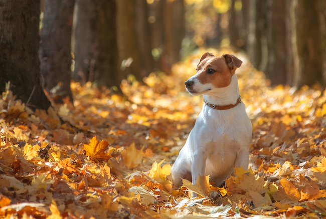 Dog Breeds Most Likely & Least Likely to Run Away