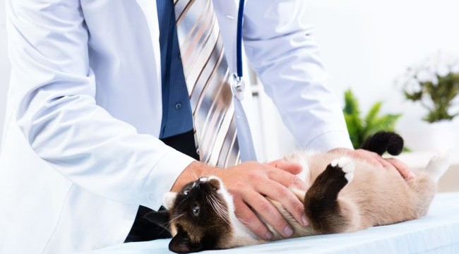 Vet Visit Checklist: Preparing for Your Pet's Physical