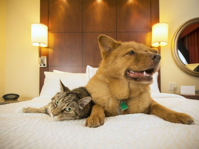 Pets As Family Members: What is Too Far?