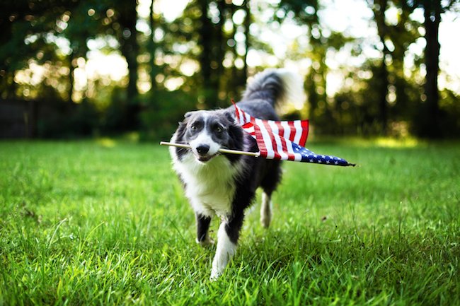 4th of July Hazards for Pets