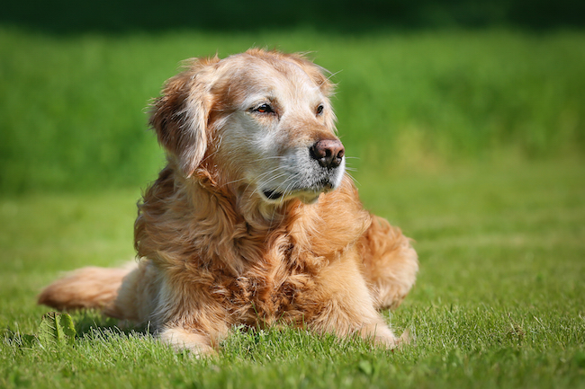 What To Do When Your Pet Has Urinary Incontinence