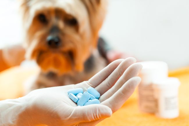 Birth Control for Pets