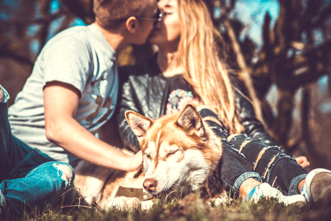 How Caring for Pets Can Improve Your Love Life