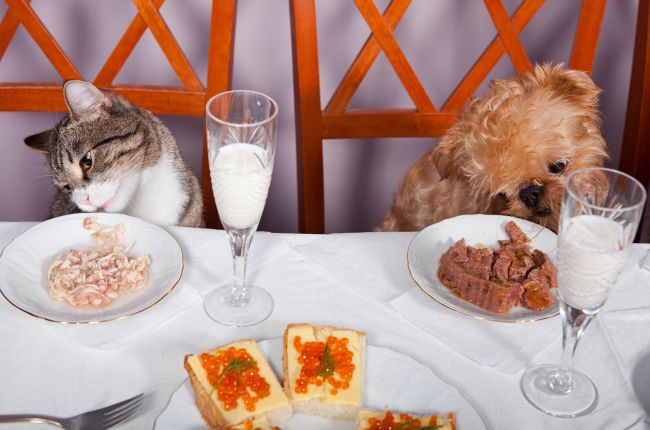 Gourmet Pet Restaurants – Are They A Good Idea?