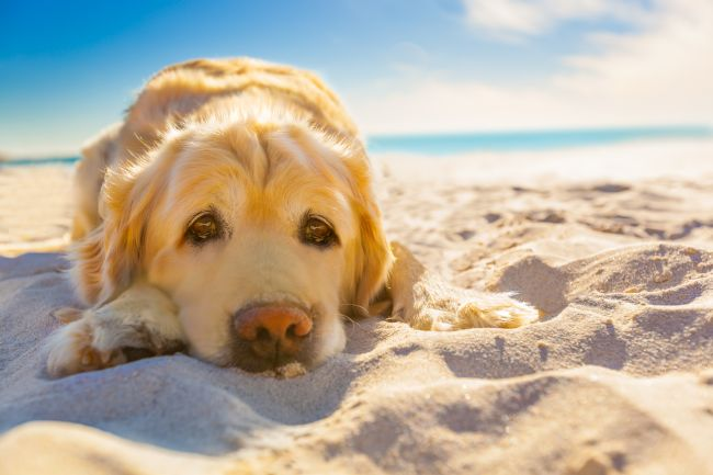 Summertime Hazards for Pets