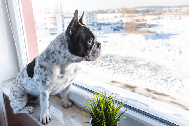 5 Reasons to Keep Your Dog Indoors