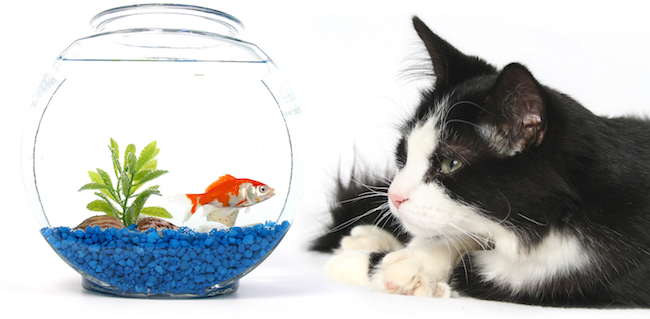 Felines and Fish Tanks
