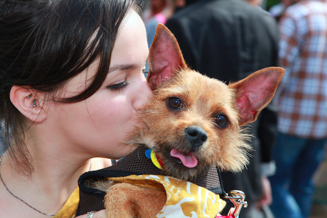 Myths About Adopting Pets