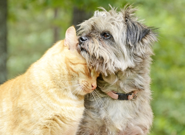 Cats and Dogs: Best Frenemies