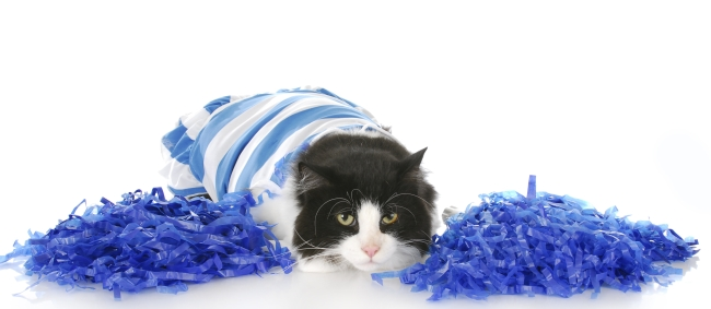 Awful Halloween Costumes for Cats