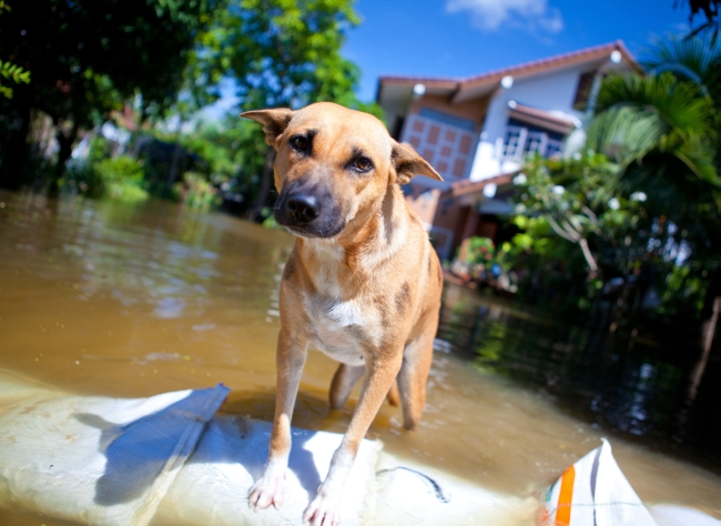 Rescuing Pets in the Wake of Hurricane Joaquin