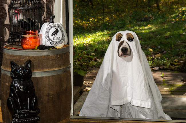 Tips on How to Keep Pets Safe on Halloween