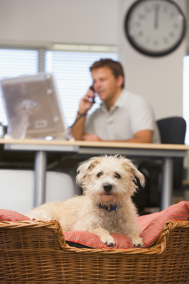 Questions to Ask Prospective Pet Owners