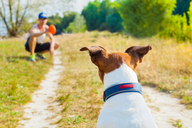 How to Stay Sane When You Live with A High-Energy Dog