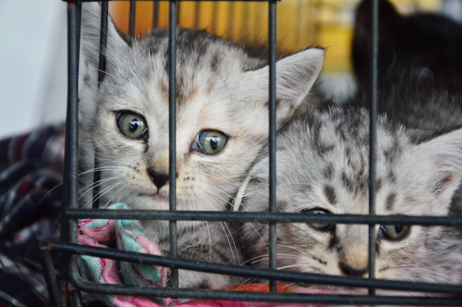 Illegal Pet Trade in Europe