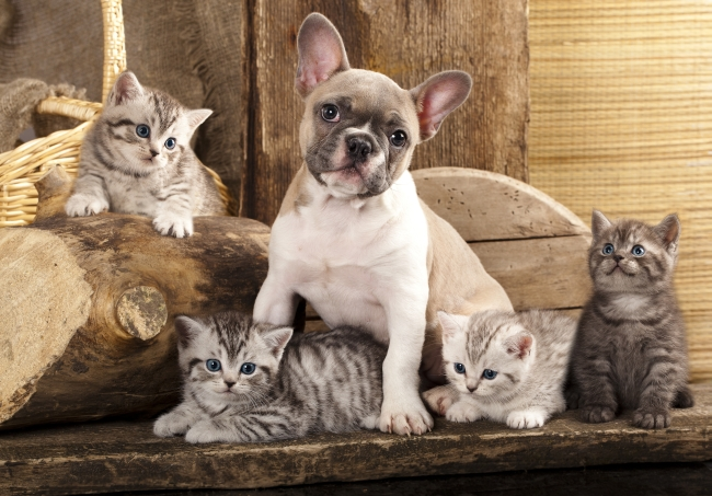How to Find Good Homes for Your Pet's Litter