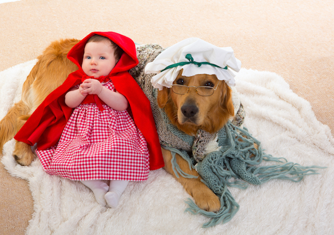 Dogs that Are Ready for Halloween