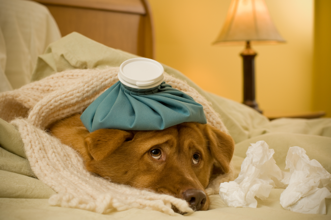 Medications for Pets