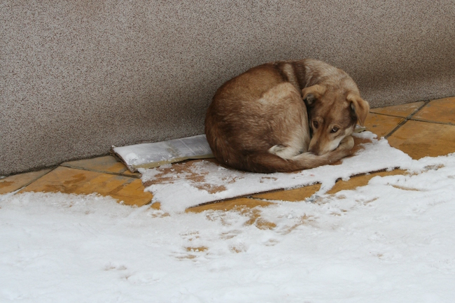 Hypothermia In Dogs: Causes and Symptoms