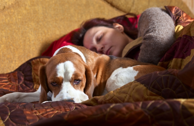 How To Tell If Your Pet Is Your Therapist