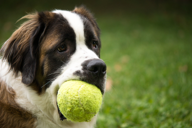 Controversial Pet Toys and Care Products