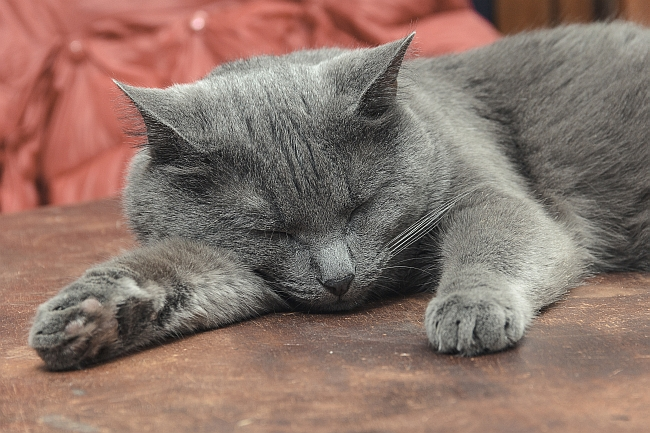 Renal Failure in Senior Cats