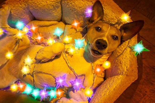 Pets With the Christmas Spirit