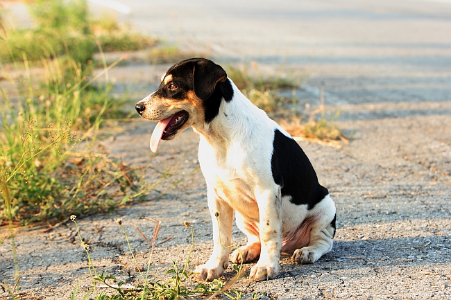 Saving Strays: What To Do When You Find a Stray Pet
