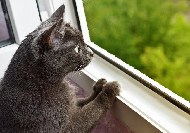 Entertaining An Indoor Cat