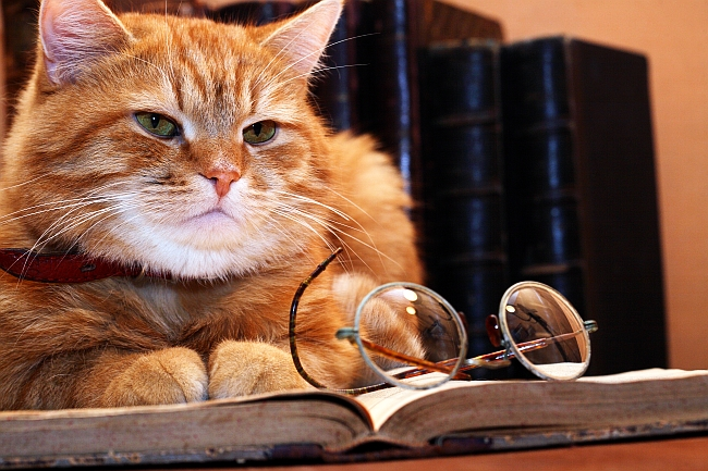8 Key Life Lessons You Can Learn From Cats