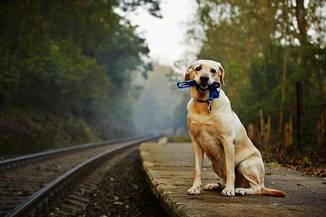 Travel Safety Tips for Dogs