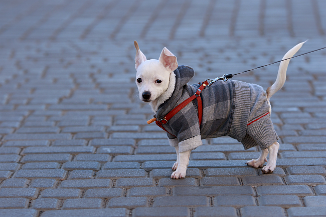 7 Dog Breeds for Busy People