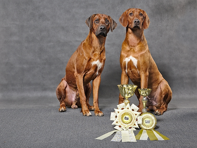 Rhodesian-ridgebacks-with-prize