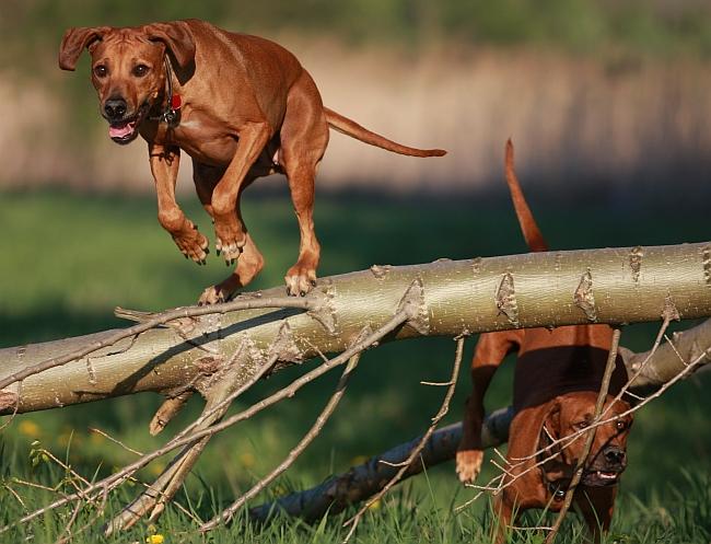Hunting & Tracking