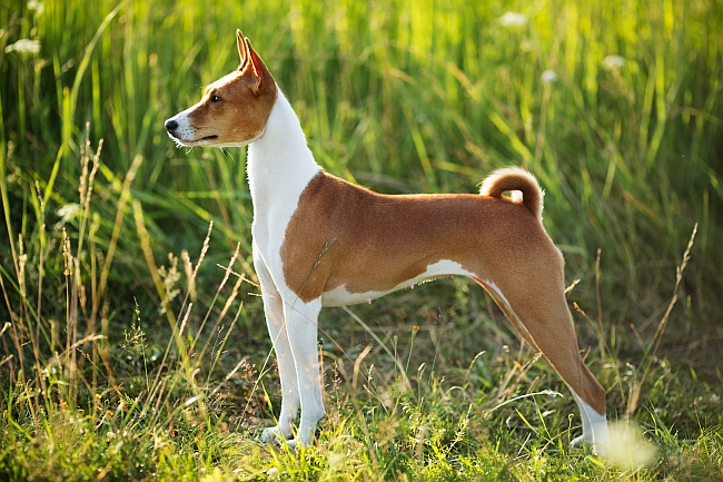 Historical Facts About Dogs